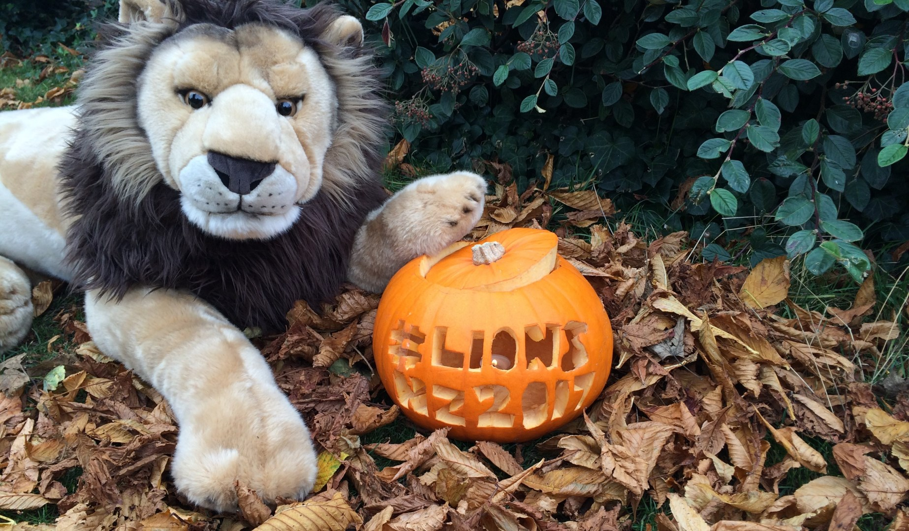 Carve a Lions pumpkin and win an official backpack!