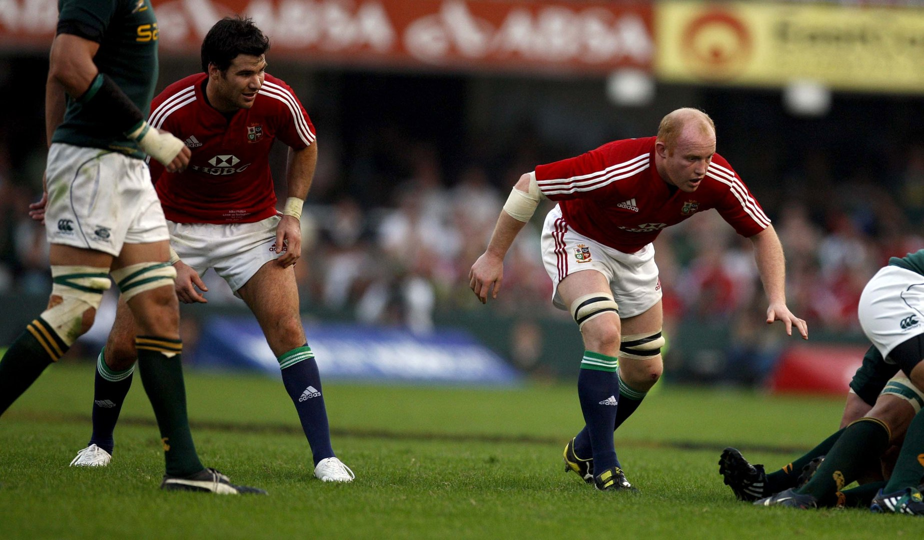 Becoming a Lion: Martyn Williams