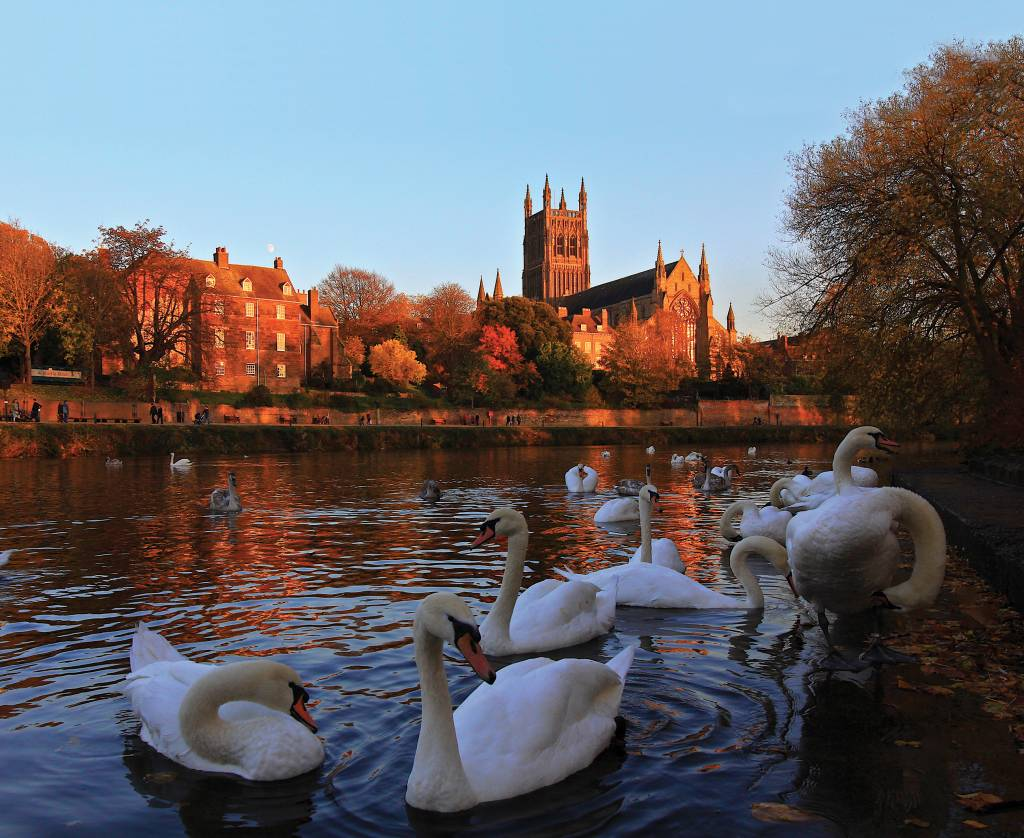 Worcester-Cathedral-and-swans